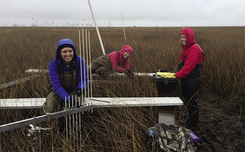 Researchers take SET measurements at the Chesapeake Bay National Estuarine Research Reserve in Maryland, one of seven CBSSC sentinel sites. Photo, Sarah Wilkins