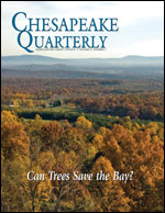 issue cover - trees in western Maryland