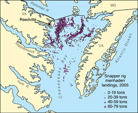 Snapper rig menhaden landings, 2005. Source: Joseph Smith, National Marine Fisheries Service.