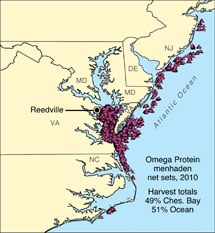 Omega protein menhaden sets, 2010. Source: Joseph Smith, National Marine Fisheries Service.