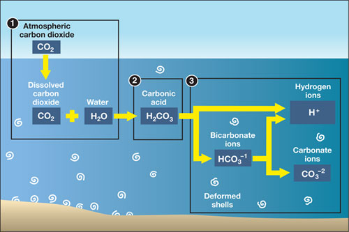 Acidification diagram.
