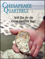 "issue cover - Did Algonquin tribes call the Chesapeake a ""great shellfish bay?"" Scholars disagree on the origins of the Bay's name, but scientists agree that the waters of the Chesapeake were once the greatest oyster grounds in the world. A new generation of oyster farmers could face a new challenge if acid levels rise in the estuary. Photograph by Michael W. Fincham."