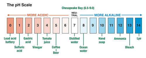 pH Scale. Source: Figure Adapted from Current: the Journal of Marine Education, Volume 25, Number 1, 2009.