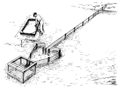Trotlining drawing from the Virginia Institute of Marine Science