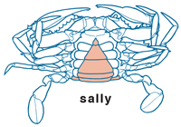 Sally by Al Kettler