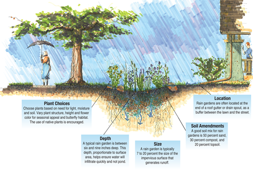 Rain garden illustration by Doug Adamson, courtesy of USDA-NRCS, Iowa