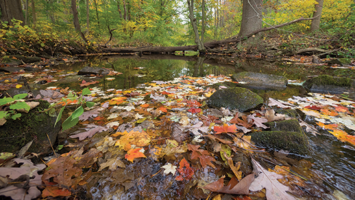 White Clay Creek in rural southeastern Pennsylvania. Photograph: David Harp