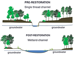 Stream restoration illustration. Credit: Solange Filoso, University of Maryland Center for Environmental Science (UMCES)