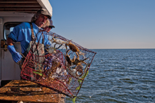Donny Eastridge pulls in a crab pot. Photograph: Michael W. Fincham