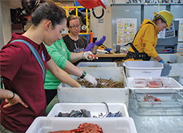 Sorting specimens by species for further study. Credit: NOAA-OER/BOEM/USGS