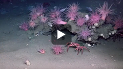 Atlantic Canyons: Pathways to the Abyss video