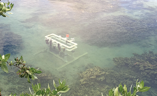 ACT field station on a coral reef in Hawaii. Photograph, Alliance For Coastal Technologies