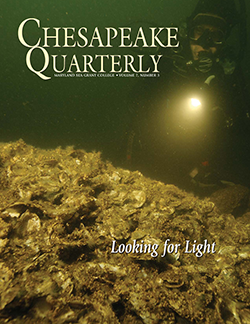 Oyster bar, cover of Chesapeake Quarterly Volume 7, Number 3. Photograph, Michael Eversmier
