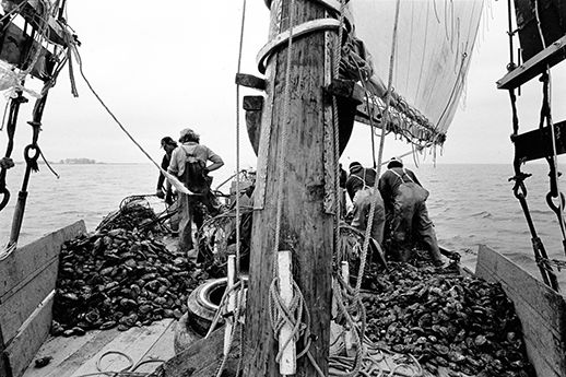 Oyster harvest on a skipjack. Photograph by Skip Brown