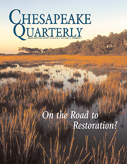 Bay marsh, cover of Chesapeake Quarterly Volume 15, Number 2. Photograph, Skip Brown