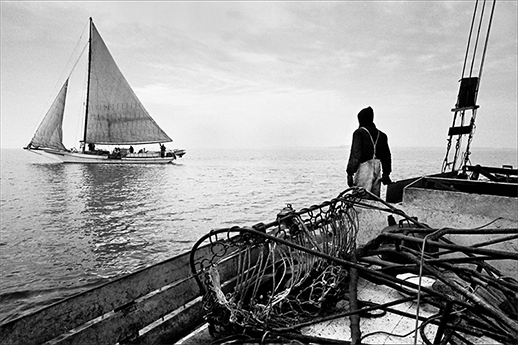 Two skipjacks. Photograph, Skip Brown