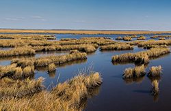 A marsh along the Chesapeake Bay shore