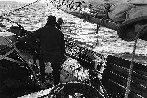 Watermen watch an oyster dredge hit the deck. Photograph courtesy of the Chesapeake Bay Maritime Museum