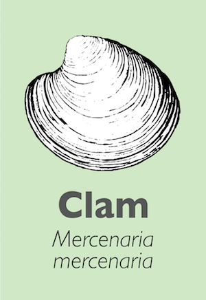 Illustration of a clam