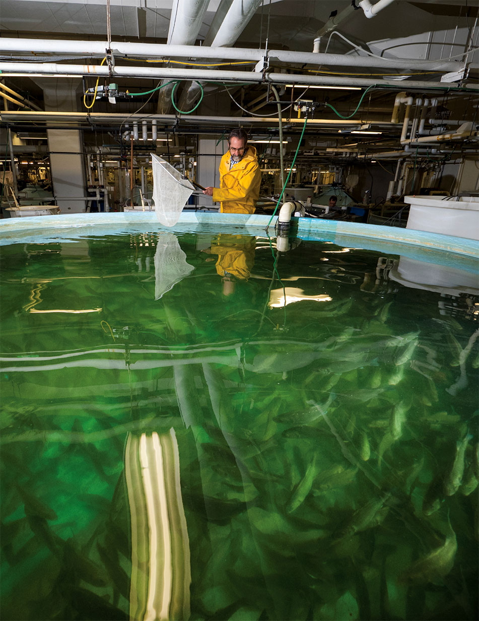 Image of IMET scientist John Stubblefield standing over an aquaculture tank