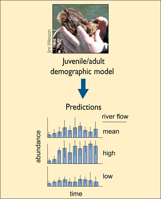 juvenile/adult demographic model used to predict abundance over time and river flow