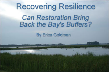 Recovering Resilience - Can Restoration Bring Back the Bay's Buffers? Article by Erica Goldman. Photo of a   Maryland marsh By Sandy Rodgers.