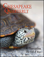 issue cover - terrapins on the patuxent