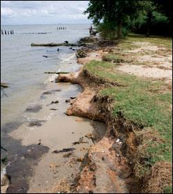Chesapeake Quarterly Volume 8, Number 3: Sea Change for Bay