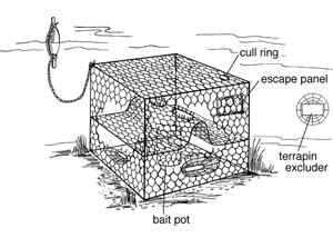 Crab potting drawing from the Virginia Institute of Marine Science