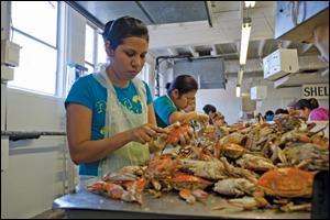 A line of women pick crabs at the J. M. Clayton Seafood Company in Cambridge, Maryland. Credit: Daniel Strain.