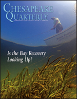 issue cover - An underwater fisheye-lens shot gives a dramatic view of bay grasses and a fisherman in the Susquehanna Flats. In recent years underwater grassbeds have suddenly expanded across the Flats, the broad, shoal-like shallows at the head of the Chesapeake Bay. Grass species returning to the Flats include redhead grass, coontail, watermilfoil, water stargrass, and wild celery. Credit: Octavio Aburto.