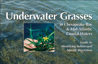 Cover of Underwater Grasses