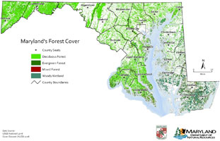 Forest coverage map