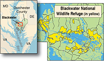 Map of Blackwater courtesy of U.S. Fish and Wildlife Service