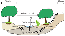 Hyporheic zone adapted from Fisher et al., Geomorphology 89:84-96 (2007)