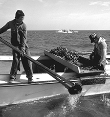 Watermen harvesting oyster with dredges and tongs. Credit: Michael W. Fincham
