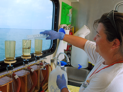 Biologist measures nutrients in the Bay. Photograph, courtesy of the Chesapeake Bay Program
