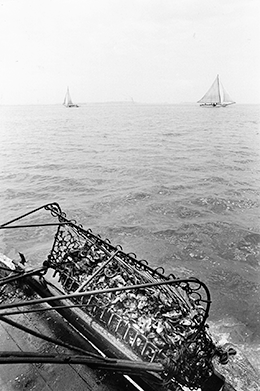 Oyster dredge. Photograph, Skip Brown