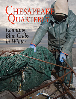 Counting Blue Crabs in Winter, cover of Chesapeake Quarterly Volume 5, Number 4. Photograph, Skip Brown