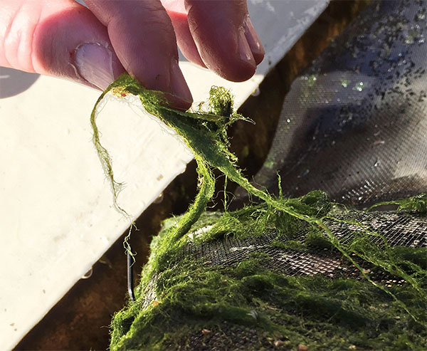 Image of a hand holding seaweed