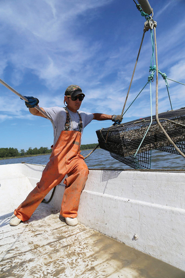 Kent County Oyster Farmer Scott Budden brings knowledge, enthusiasm, and maybe oysters to our board.