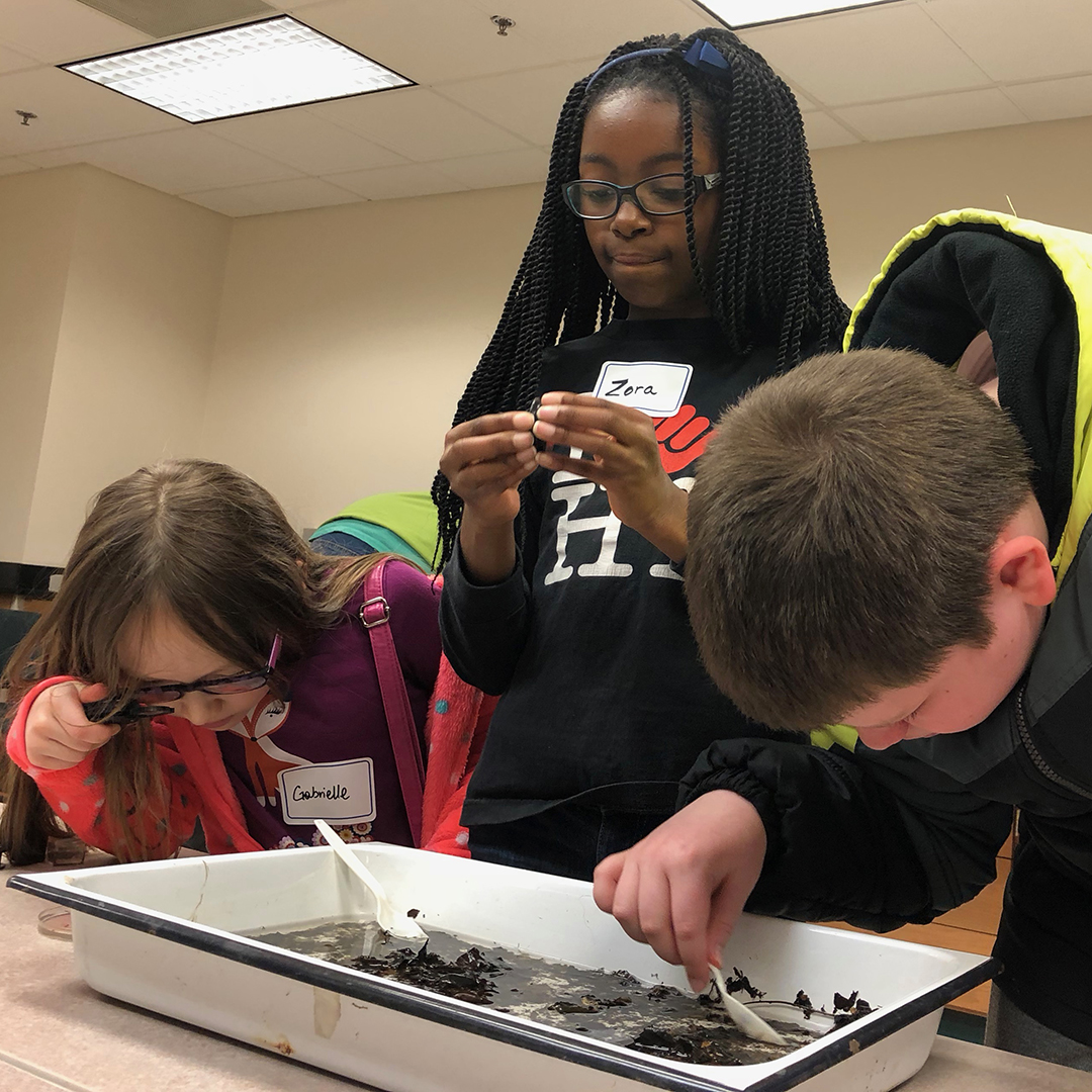 Local students Gabrielle Rinard, Zora Edmondson, and Kevin Rinard look for bugs in the Appalachian Laboratory. Photograph, Rona Kobell
