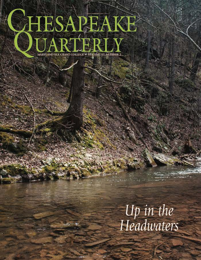 issue cover - A stream flows through Green Ridge State Forest on its way to the Chesapeake 200 miles downstream. PHOTOGRAPH, NICOLE LEHMING