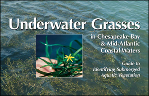 Underwater Grasses in Chesapeake Bay & Mid-Atlantic Coastal Waters:  Guide to Identifying Submerged Aquatic Vegetation